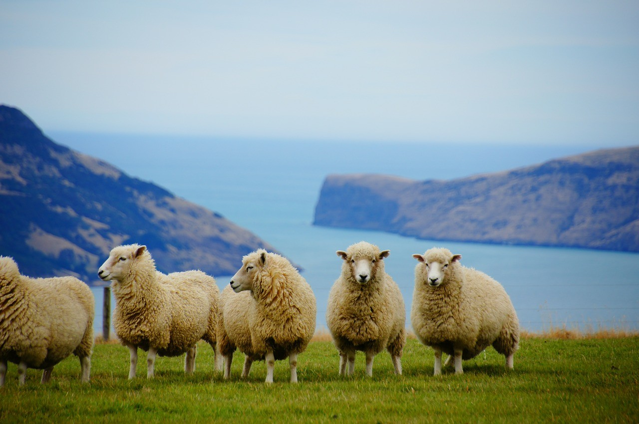 Places - New Zealand -Two lost Feet