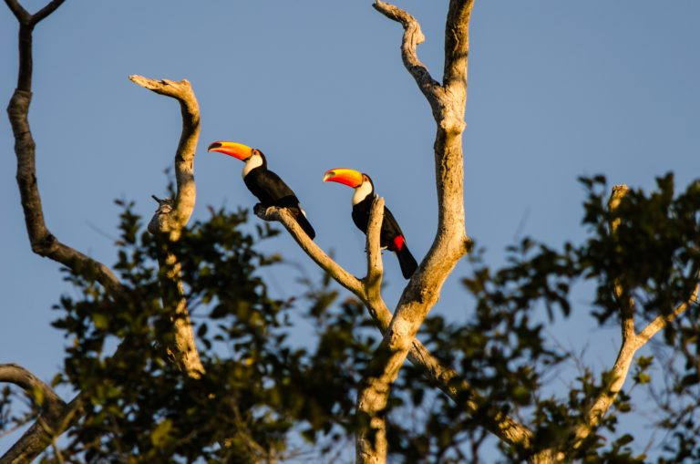The Pantanal - Two lost feet