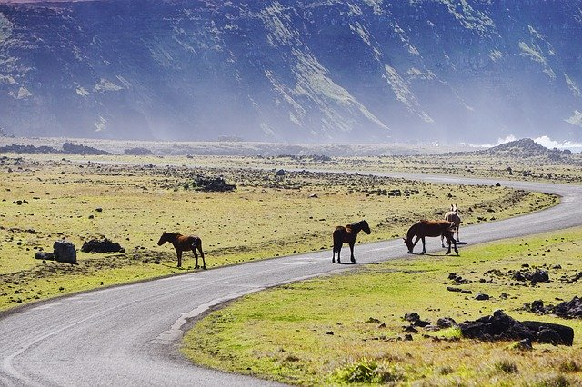 horses on rapa nui